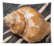 Seashell Tapestry