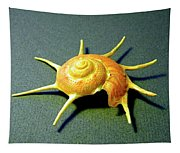 Seashell Guildfordia Yoca Tapestry