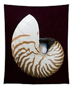 Seashell On Black Background Tapestry