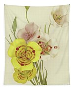 Sego Lily   Calochortus Tapestry