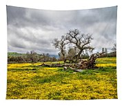 Shell Creek Awash In Yellow Tapestry