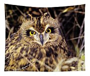 Short Eared Owl Tapestry