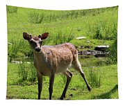 Sika Deer Water Hole Omagh Tapestry