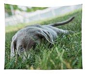 Silver Labrador Retriever  Tapestry