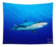 Silvertip Shark In Thailand Tapestry