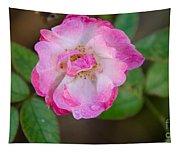 Single Rose 2 Tapestry