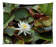 Single Water Lilly  Tapestry