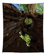 Sky View Through A Hollow Tree Trunk Tapestry