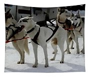 Sledge Dogs H B Tapestry