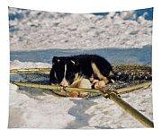 Sleeping Puppy Tapestry