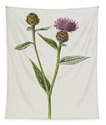 Small Knapweed  Tapestry