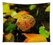 Small Mushroom In Autumn Tapestry