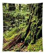 Snoqualmie National Forest Tapestry