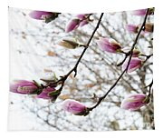Snow Capped Magnolia Tree Blossoms 2 Tapestry