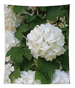 Snowball Tree With Delicate Leaves Tapestry