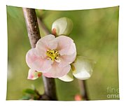 Pink Quince Blossom Tapestry