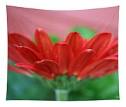 Soft Red Tapestry