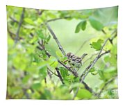 Song Sparrow With Dinner Tapestry