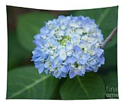 Southern Blue Hydrangea Blooming Tapestry