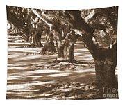 Southern Sunlight On Live Oaks Tapestry