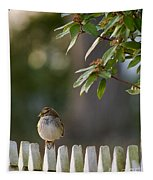 Sparrow In Colonial Williamsburg Tapestry