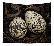 Speckled Killdeer Eggs By Jean Noren Tapestry