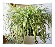Spider Plant Tapestry