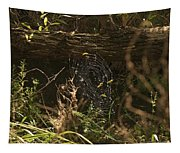 Spiders Web In Sunlight In Peters Canyon Tapestry