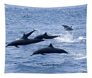 Spinner Dolphins Tapestry