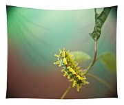 Spiny Oak Slug Moth 7 Tapestry