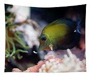 Spotted Aquarium One Fish Tapestry