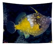 Spotted Filefish Tapestry