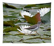 Spotted Sandpiper And Lilies Tapestry