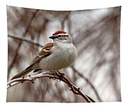 Spring Chipping Sparrow Tapestry