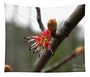 Spring Flower Closeup 1 Tapestry