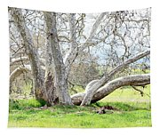 Spring Sycamore Tree Tapestry