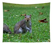 Squirrel Iv Tapestry