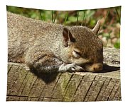 Squirrel Nap Tapestry