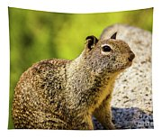Squirrel On The Rock Tapestry