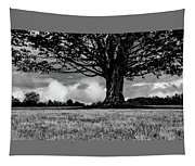 St. Benedict Abbey Single Tree In Summer Tapestry