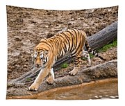 Stalking Tiger - Bengal Tapestry