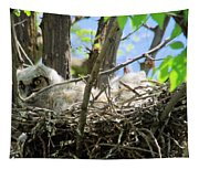 Staring From Its Nest Tapestry