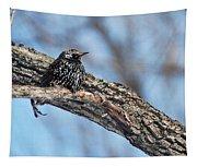 Starling Tapestry