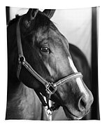 Horse And Stillness Tapestry