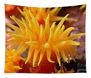 Stony Cup Coral Tapestry