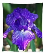 Striped Blue Iris Tapestry