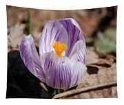 Striped Crocus Tapestry