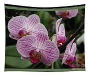 Striped Orchids With Border Tapestry