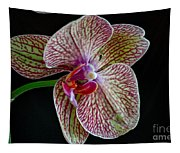 Study Of An Orchid 2 Tapestry