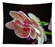 Study Of An Orchid 3 Tapestry
